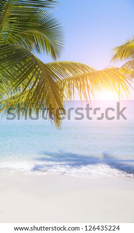 Sun through palm tree leaves. Summer beach.