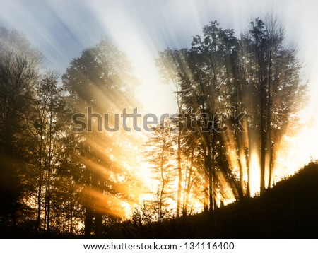sunbeam at a forest - photo - stock photo