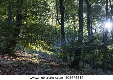 sunbeam between trees in fall at low mountain range sauerland, germany