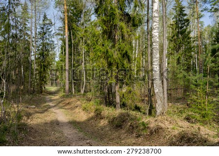 sunbeam in a dark pine forest scene - stock photo