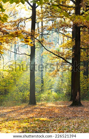 sunbeam lit glade in autumn forest in sunny day