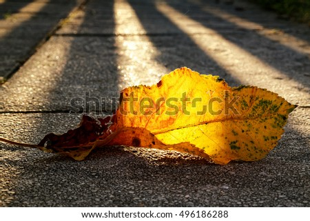 Sunbeam on a withered autumn leaf and the shadow of a fence