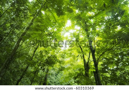Sunbeam shine through the green forest - stock photo