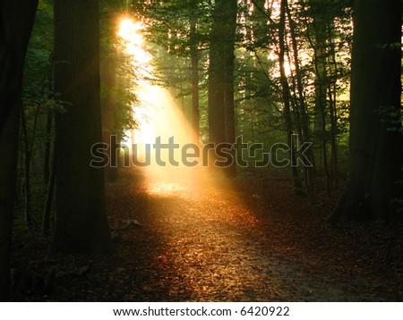 Sunbeam through the forest - stock photo