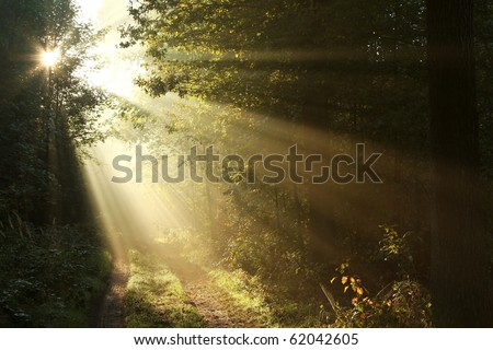 Sunbeams falling on the path in autumn forest on a foggy morning. - stock photo