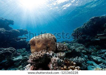 Sunbeams illuminate a brain coral and a tropical reef - stock photo