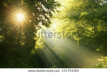 Sunbeams in Foggy Forest  - stock photo