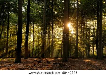Sunbeams in forest at early fall