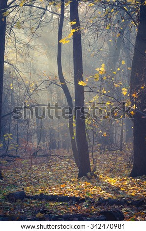 Sunbeams pour into the autumn forest - stock photo