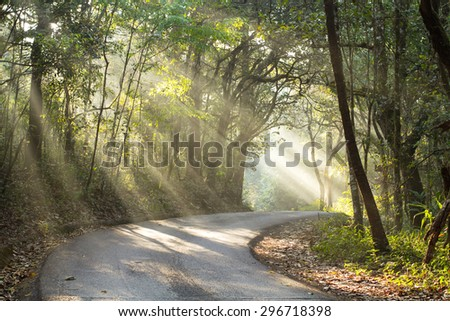 Sunbeams pour into the road in autumn forest. - stock photo