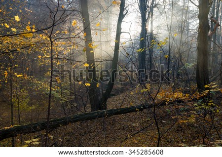 Sunbeams pour into the shadows of foggy autumn forest - stock photo