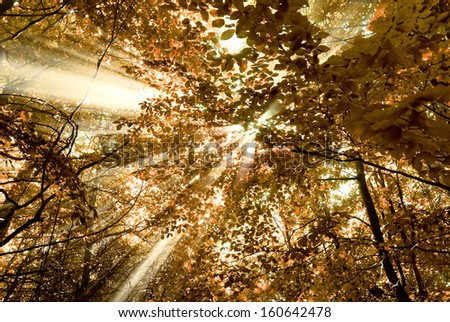 sunbeams through the forest foliage - stock photo