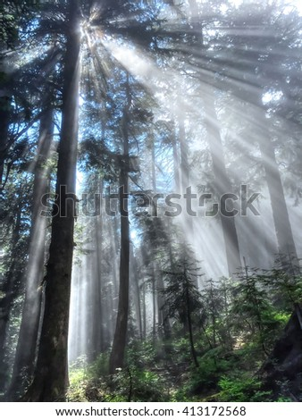 Sunbeams Through Trees.  Beautiful sun rays in forest. St. Marks Summit trail, Cypress Mountain Provincial Park, British Columbia, Canada.   - stock photo