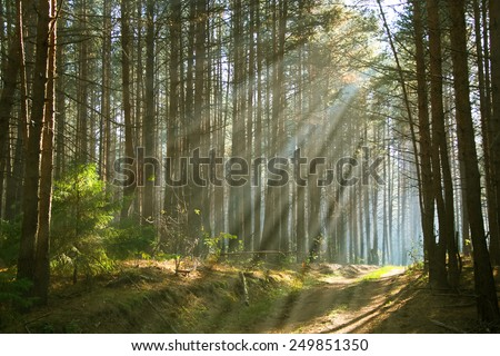 Sunbeams throught the trees - stock photo