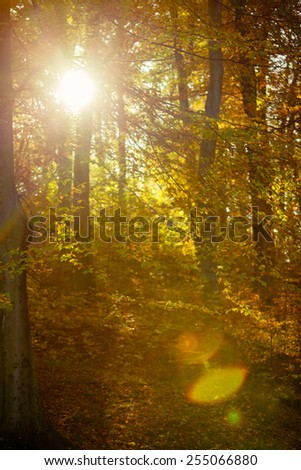 Sunbeams trough autumnal fall trees in park. Sunlight in autumn forest - stock photo