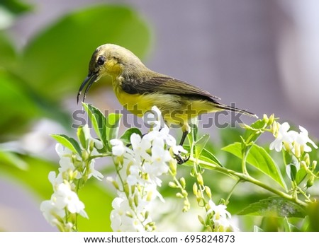 Sunbird and flowers.