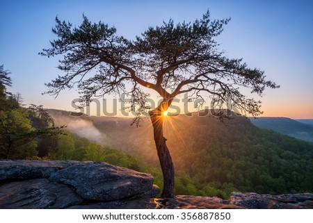 Sunburst behind the iconic pine tree at Buzzards Roost in Fall Creek Falls state Park in Tennessee. - stock photo