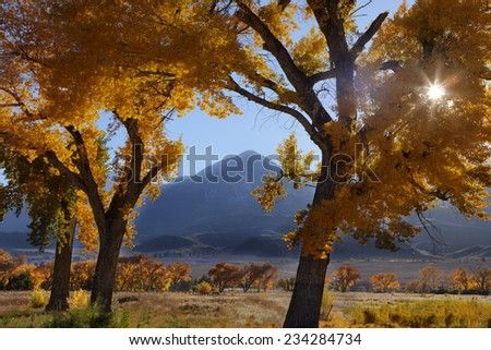 Sunburst through golden cottonwoods in autumn in California's Sierra Nevada mountains - stock photo