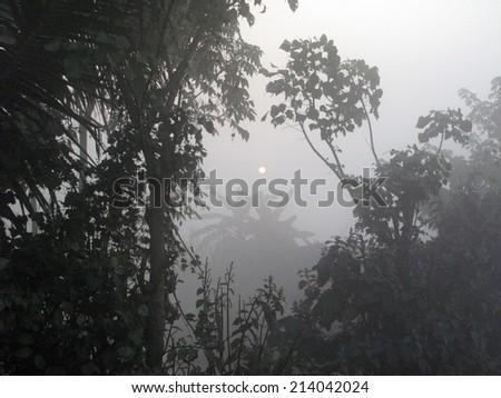 Sundarbans: Dawn in the jungles - stock photo
