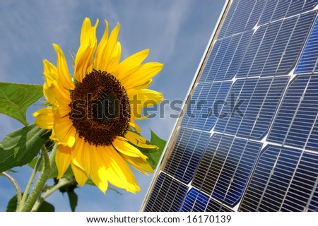 Sunflower and a solar energy panel - stock photo