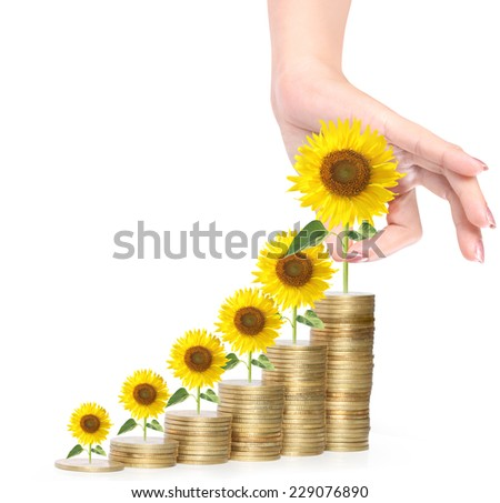 Sunflower and coins Money growth concept, Investments in stock market  - stock photo