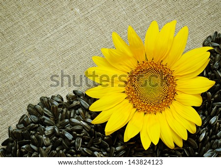 Sunflower and seeds on canvas background