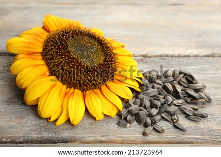 Sunflower and seeds on wooden background - stock photo