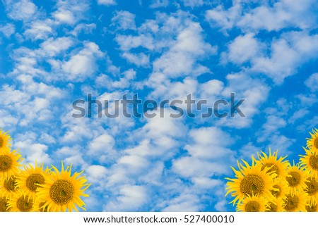 Sunflower Background on sky and clouds