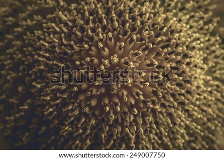 Sunflower close-up. Color toned. Selective focus with shallow depth of field. - stock photo