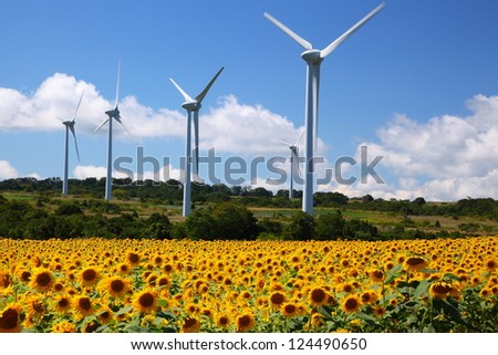 Sunflower field with windmill in Fukushima, Japan