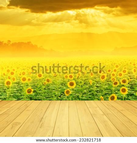 Sunflower fields mountain and Sunset - stock photo