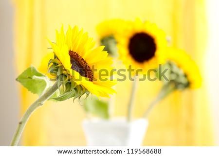Sunflower 'Helianthus annuus' - stock photo