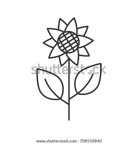 Sunflower Line Drawing Stock Images Royalty Free Images