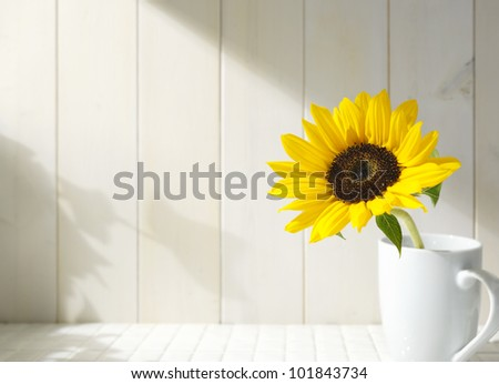 Sunflower in a white cup - stock photo