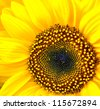 Sunflower macro - stock photo