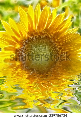Sunflower Melting into the Horizon - stock photo