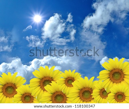 Sunflower nature summer with blue sky and sun background