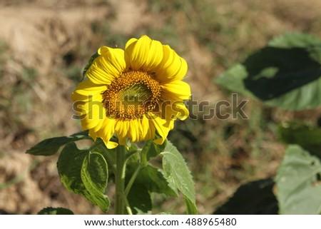 sunflower oil production business plan