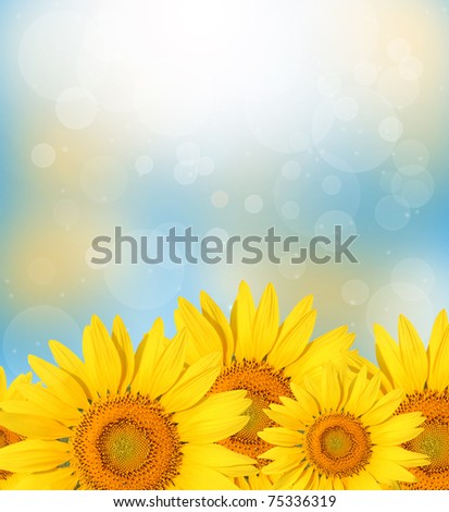 Sunflower on spring nature background.