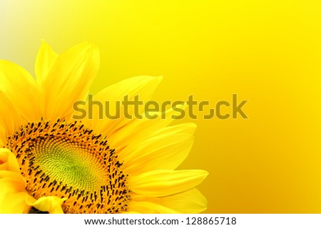 Sunflower on summer background - stock photo