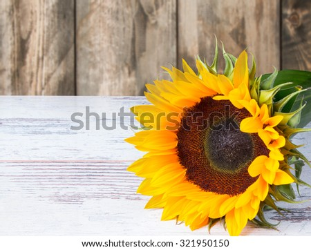 Sunflower on wooden table with nature background - stock photo