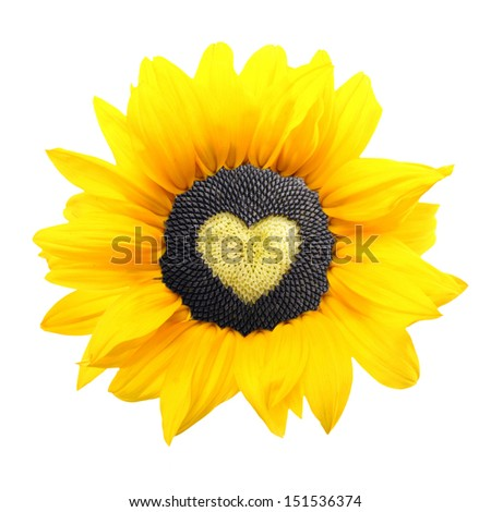 Sunflower plant with heart from seed isolated on white background.