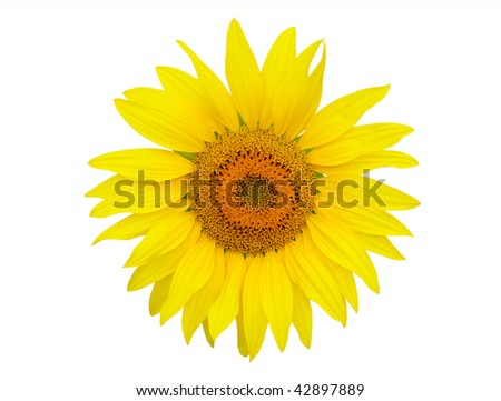 Sunflower Seed on white background