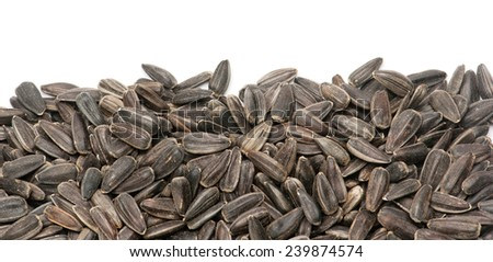 Sunflower seed with husk isolated on white background