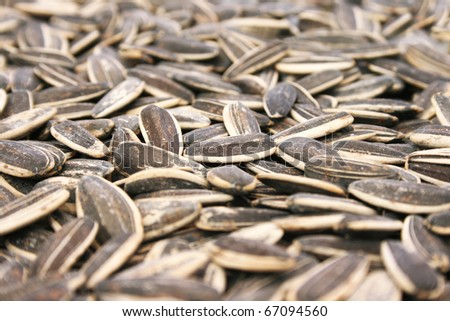 Sunflower seeds as a background. - stock photo