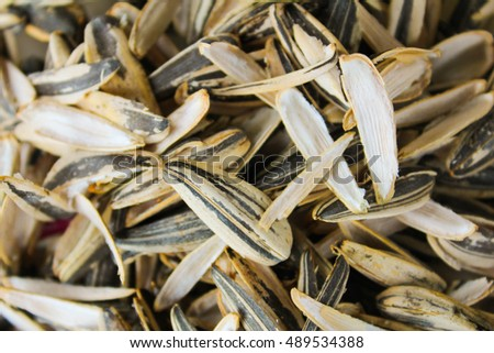 Sunflower Seeds Detail
