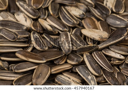 sunflower seeds pile close up shots for background