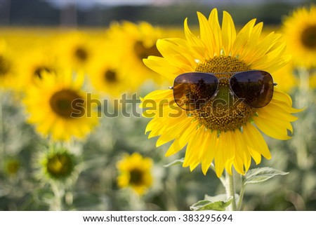 Sunflower wearing sunglasses in the field - Soft focus flowers, Background, Wallpaper - stock photo