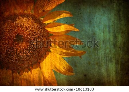 Sunflower with grunge texture - stock photo