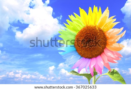 Sunflower with petals, painted in different colors. On background  white clouds in the blue sky